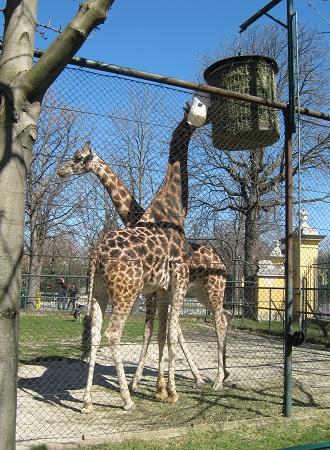 Шёнбрунн. Венский зоопарк