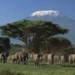 Отдых в Кении и уникальные достопримечательности страны
