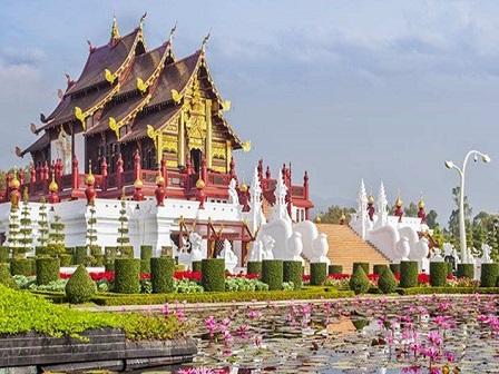 Священный лотос в Таиланде